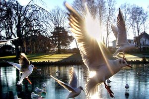 seagull_by_ugurhsdmr1